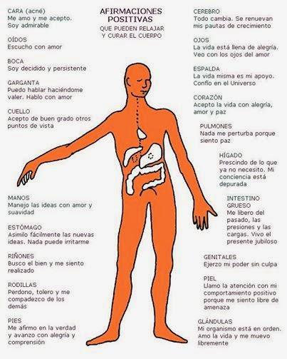¿Qué te enseña cada órgano de tu cuerpo?